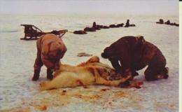 Alaska Eskimos Skinning A Polar Bear In The Artic Eskimo Dépeçant Un Ours Blanc - Stati Uniti
