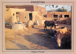 Village Of Punjab, Pakistan Postcard Used Posted To UK 2000 Gb Stamp - Pakistan