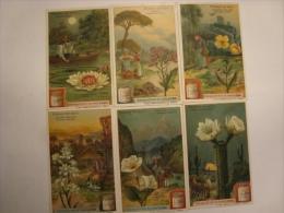 Liebig - Série De 6 Chromos Comme Neufs - S929 - FLEURS DE NUIT - 1908 - (lot 136) - Liebig