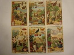 Liebig - Série De 6 Chromos Comme Neufs - S931 - Fruits Et Leurs Ennemis Du Règne Animal - 1908 - (lot 137) - Liebig