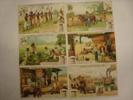 Liebig - Série De 6 Chromos Comme Neufs - S952 - La Culture Du Coton - 1909 - (lot 146) - Liebig