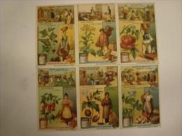 Liebig - Série De 6 Chromos Comme Neufs - S976 -SOLANEES (belladone,tabac,piment,p Ommedterre,tomate) -1909 - (lot 150) - Liebig