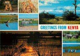 African Wildlife, Kenya Postcard Used Posted To UK 1980 Nice Stamp - Kenya