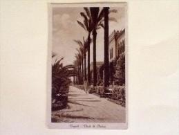 TRIPOLI VIALE DI PALME VIAGGIATA -11- - Libia