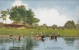 NY New York City Zoological Park Elk Bathing