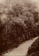 Grande Bretagne   Shirley Hills CRoydon - Surrey