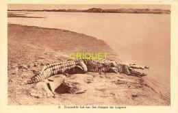 Tchad,  r�gion de Bangor, crocodile tu� sur les rivages du Logone