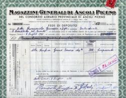 MAGAZZINI GENERALI DI ASCOLI PICENO DEL CONSORZIO AGRARIO PROVINCIALE DI ASCOLI PICENO-7-7-1955 - Agriculture