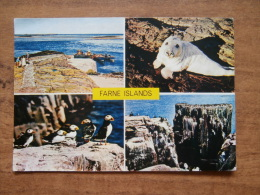 32935 PC: NORTHUMBERLAND:  Farne Islands.  A Property Of The National Trust. - Angleterre
