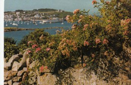 BF13617 The Harbour From Seaways Isles Of Scilly United Kingdom Front/back Image - Scilly Isles