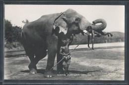 - CPA SRI LANKA - Ceylon, Temple Elephant - Sri Lanka (Ceylon)
