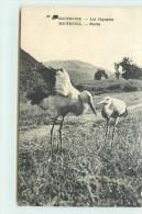 MACEDOINE  - Les Cigognes. - Macédoine