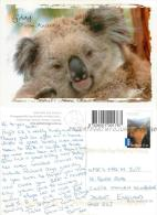 Koala Bear, Australia Postcard Used Posted To UK 2000s Stamp - Other