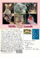Kangaroo Koala Etc, Australia Postcard Used Posted To UK 1993 Nice Stamp - Other