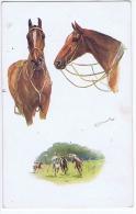 TUCK'S POSTCARD 1910s - NORA DRUMMOND - HORSE - MAN'S BEST FRIEND  - N.8650 ( B - Tuck, Raphael