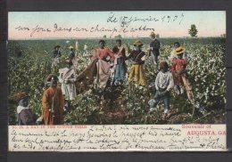 Souvenir Of Augusta - A Day In The Cotton Field - Colorisée - Augusta