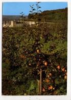 CP 10*15 CM/MM597/VILLANDRY LE CHATEAU ET LES JARDINS   LA COURONNE FRUITIERE RENAISSANCE 1993 - Otros Municipios