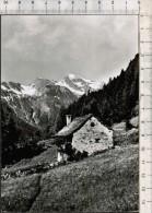 D9314a°- Alpe Gomba Bognanco Verbania Casolare, Vecchia Viagg.1969 - Verbania