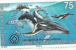 1167  Baleines à Bosses   Beau Cachet   (14) - Oblitérés