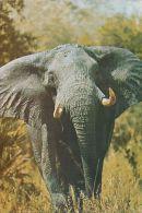 Rhodesia - Elephant - Nice Stamp - Simbabwe