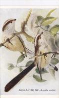 BIRD POSTCARD - LONG TAILED TIT. - Birds
