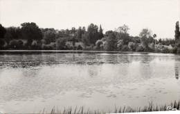Cpsm 1955, ST GERAND De VAUX, L'étang Du Moulin Très Fréquenté Par Les Pêcheurs  (35.77) - France