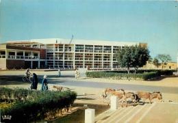 CPSM Tchad-N'Djamena   L1635
