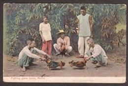 PH37) Fighting Game Cocks - Manila - Undivided Back - Filippine