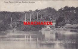 Bermudes Bermuda Royal Palms Light And Shadow éditeur J H Bradley Hamilton - Bermudes