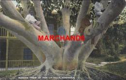Bermudes Bermuda Rubber Tree At Par La Ville éditeur Phoenix Drug Hamilton - Bermudes