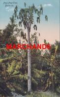 Bermudes Bermuda Paw Paw Tree éditeur Phoenix Drug Hamilton - Bermudes
