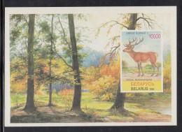 Belarus MNH Scott #134 Imperf Souvenir Sheet 10000r Cervus Elaphus - Wildlife - Belarus