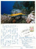 Tropical Fish, Maldives Postcard Posted 2000 Stamp - Maldives