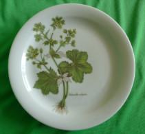 Vintage German Pottery Germany Tirschenreuth Bavaria Collector Plate Alchemilla Vulgaris - Tirschenreuth (DEU)