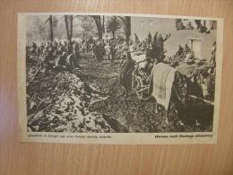 Russia -Ukraine - Poland - Invalides - Castle Hospital  -  Grande Guerre    WWI-1914-18 -print   W164 - Autres