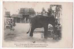 ASIE - La Toilette De L'éléphant Sacré à Rameswaram - India