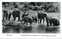 Nyeri,Elephant Photographed From A Window Treetops Hotel,British Commonwealth,Zensur,Air Mail, Stamps Uganda Kenya - Kenia