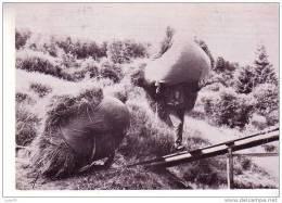 LES VOSGES - Le Fenaison -  Maintenant Il Faut Le Rentrer   -  1979  -  N°   30  - Les Vieux Métiers - Cultures