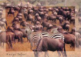 Zebras And Wildebeest, Kenya Postcard Used Posted To UK 2004 Stamp - Kenya