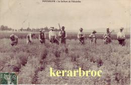 CPA 25 PONTARLIER Doubs - La Culture De L'ABSINTHE - Pontarlier