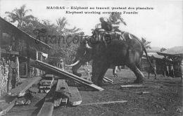 Inde India - Madras - Elephant Au Travail - Working Elephants - Exploitation Animale - Inde
