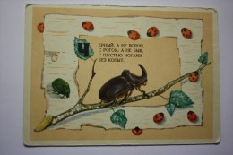 European Rhinoceros Beetle - Old USSR Postcard - 1956 - Insectes