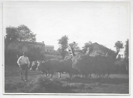 Travail Dans Les  Champs En Septembre 1921  - Attelage - Cultures