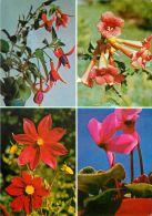 Flowers, Romania Postcard - Romania