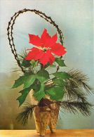 Poinsettia Plant Basket, Serbia Postcard Used Posted To Serbia 1993 ATM - Serbia