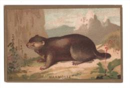 IMAGE, MARMOTTE, écrite - Animals