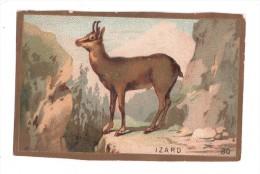 IMAGE, IZARD, écrite - Animals