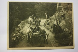 North Caucasus, Teberda River. Karachay People At The Road. Old PC - 1928 - Chechenia