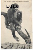 Theme Singe ; Paris , Jardin Des Plantes , Chimpanzé - Monkeys