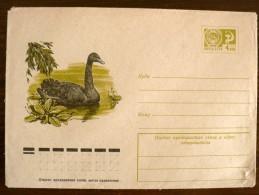 URSS-RUSSIE Oiseaux, Cygne Noir. Entier Postal Emis En 1976. Neuf - Cygnes